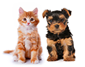 pet dog and cat
