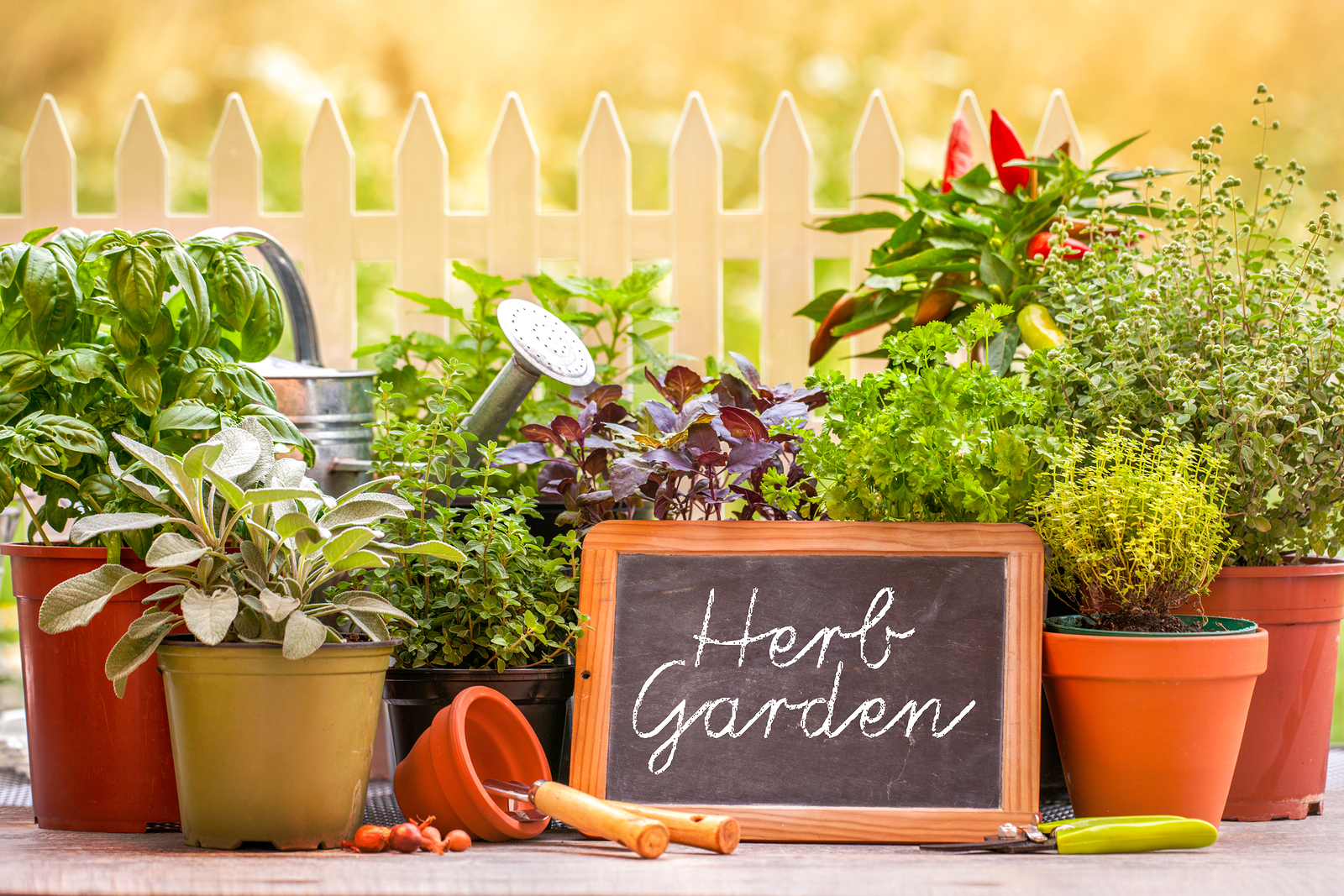 herbs, herb garden, herb growing